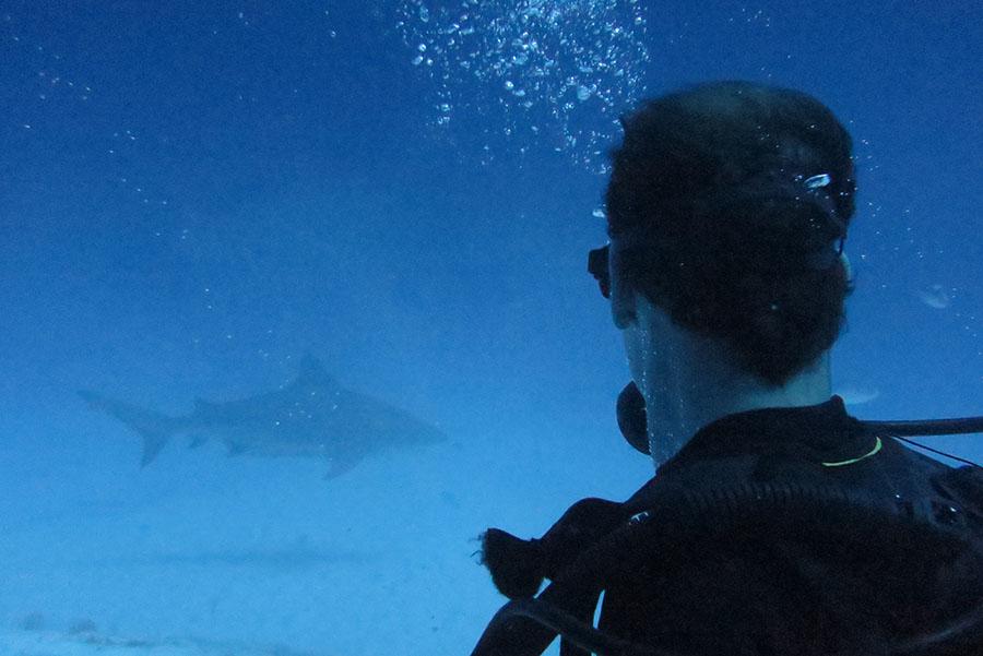 Bullshark Scuba Diving from Puerto Morelos - Om Delfin Divie Shop
