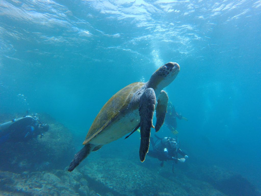 Dive with us - Om Delfin - Diving in Puerto Morelos